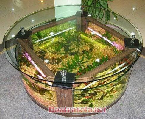 Bàn trà mặt kính kết hợp sử dụng bể cả cảnh đẹp và sang