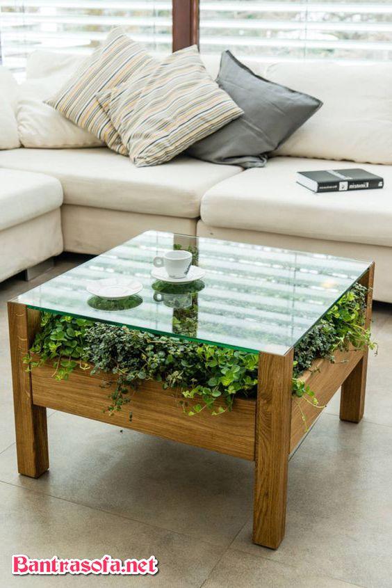 bàn trà chân gỗ cây cảnh